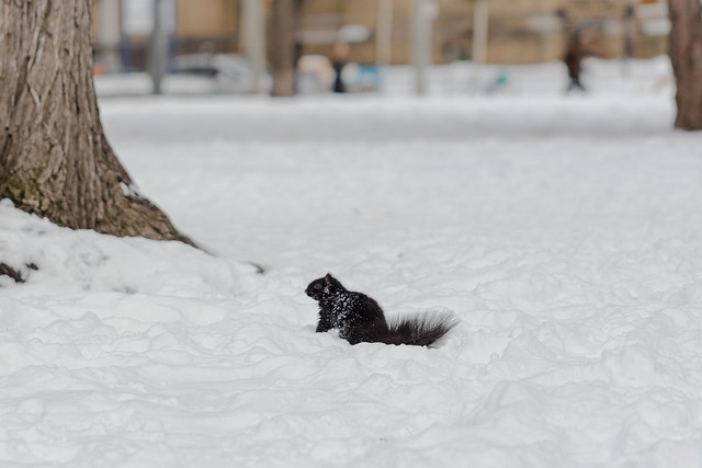 Squirrel Playing In The Snow