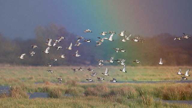 Flying through a rainbow (Catcott Lows)