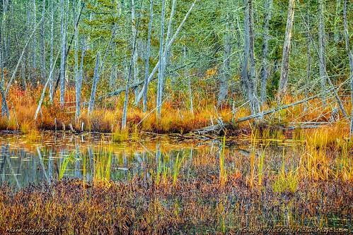 autumn maine newengland fallseason seasons foliage nature landscape mainehighlands october dextermaine penobscotcounty trees cattails tapestry