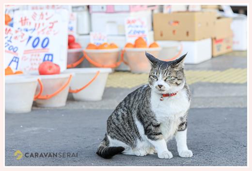 八百屋の前のネコ