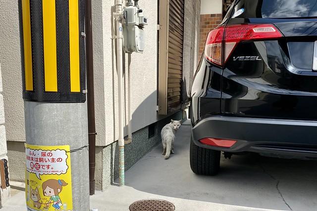 Today's Cat@2020ー03ー02