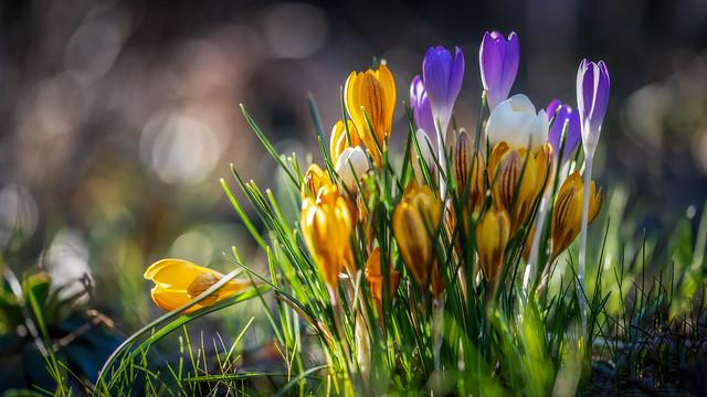 bokeh of light and flowers - Bokeh aus Licht und Blumen