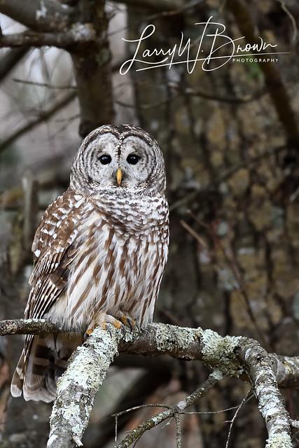 Hawksbill Hunter