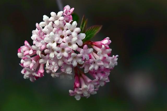 Spring-1