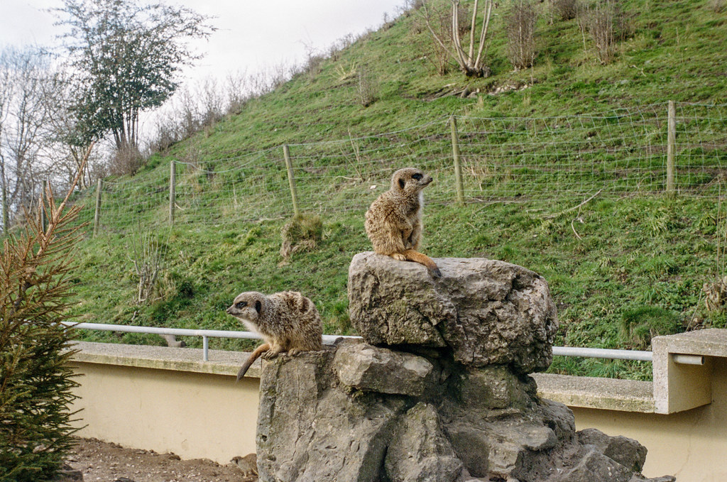 Animals at Dudley Zoo Dudley Zoo with the Leica iiia and 28mm Voigtlander lens