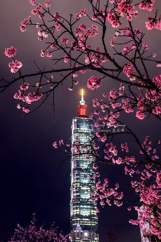 Cherry Blossoms & Taipei 101 Building
