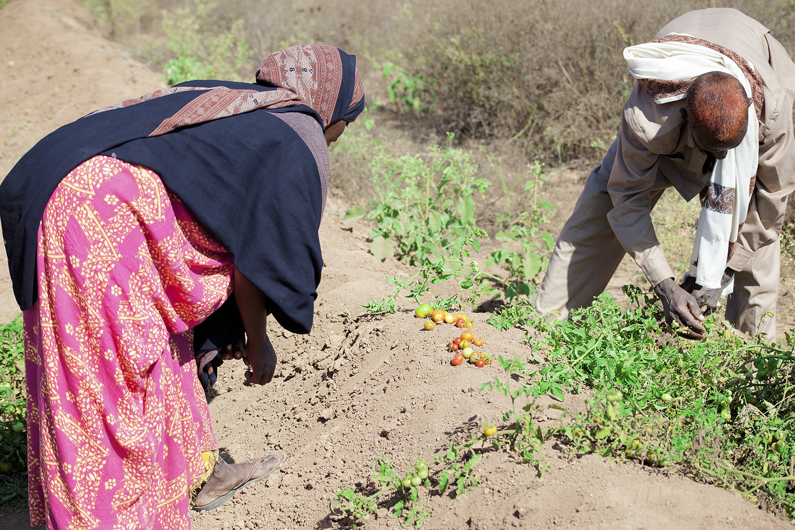 Addressing acute food insecurity in rural areas 2 - Somalia