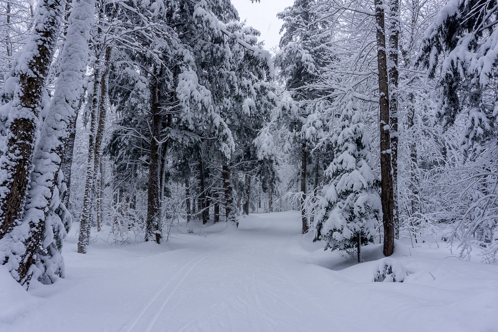 Skiing through the forrest
