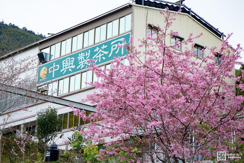 【遊記】嘉義阿里山鄉中興製茶所 (47)