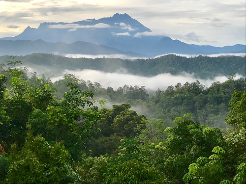 A forest in Borneo.