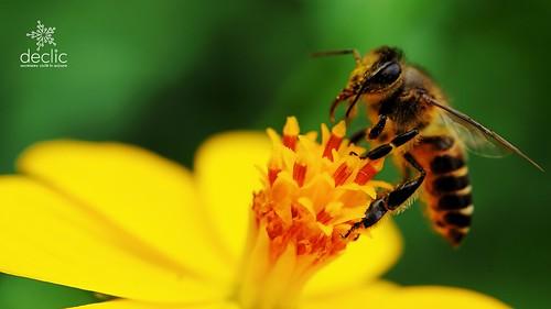 Salvați albinele