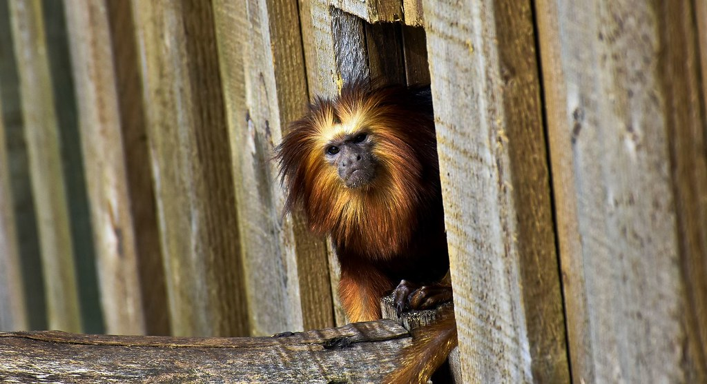 Zoo de Cerzat