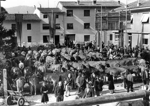 Lis brauris di une volte: mostre di vacjis, agns Sessante, li dal Circul agrari di Glemone (Archivi storic di Cjase Cocel, Feagne)