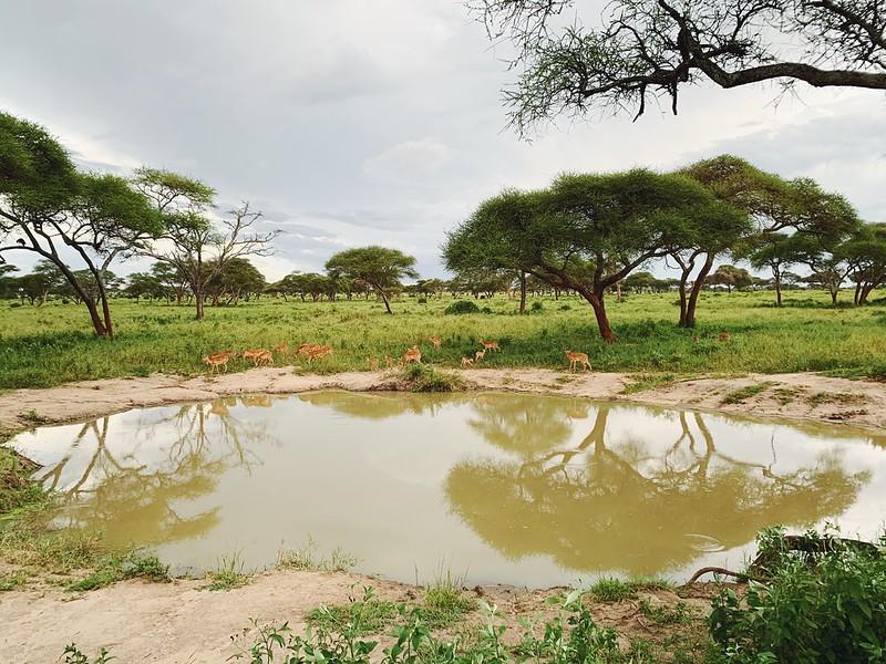 Safari Tansania Tarangire