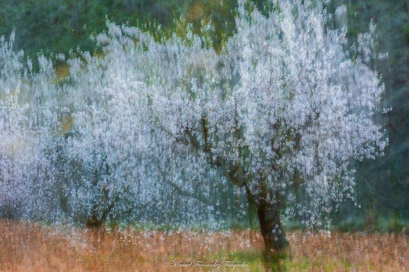 Floración impresionista