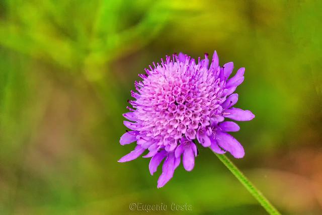 un piccolo fiore - a little flower.