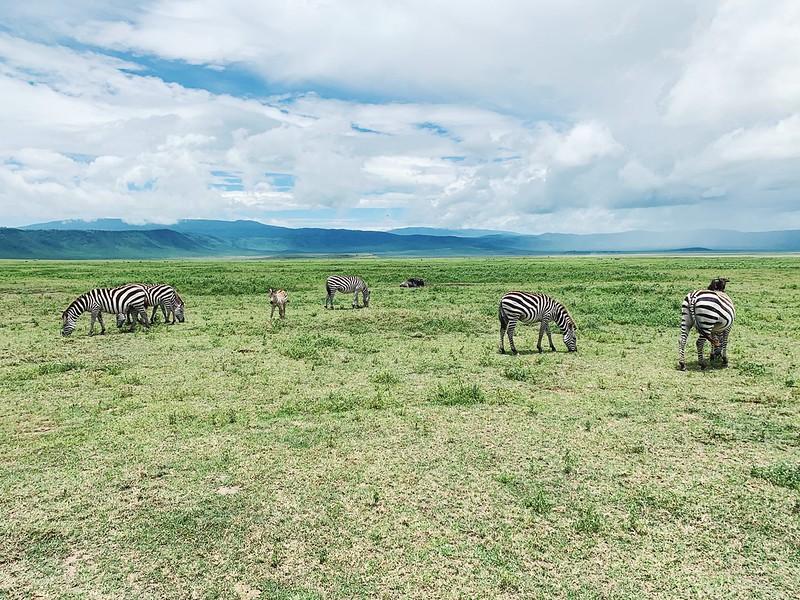 Tansania Ngorongoro kraatteri