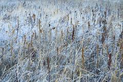 Frosty fallow - Brache im Frost