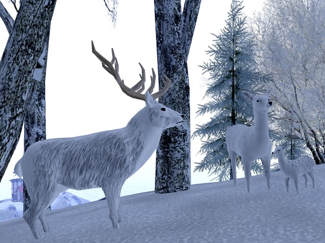 Anya's Place - Siberian Deer Family In A Beech Woods