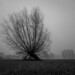 Kopfweide im Nebel