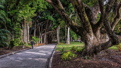 florida htmt sarasota theringling tremendoustuesday grounds landscapes lane men people trees walking