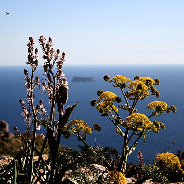 Mediterranean Sea, Malta