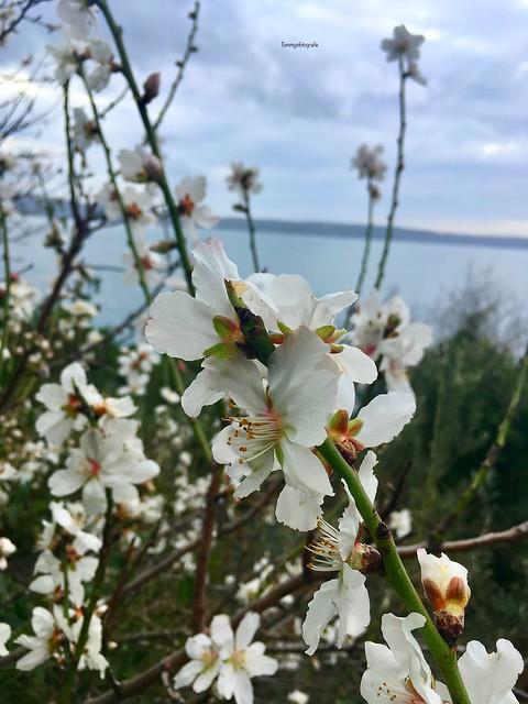 Spring starts when the almond start flowering.