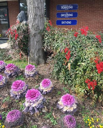 baltimore maryland fallsrdanimalhospital ornamentalcabbage ornamentalbamboo landscaping plants textures iphone htt