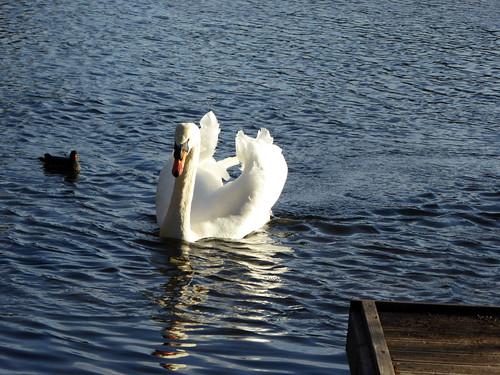 Tee Lake