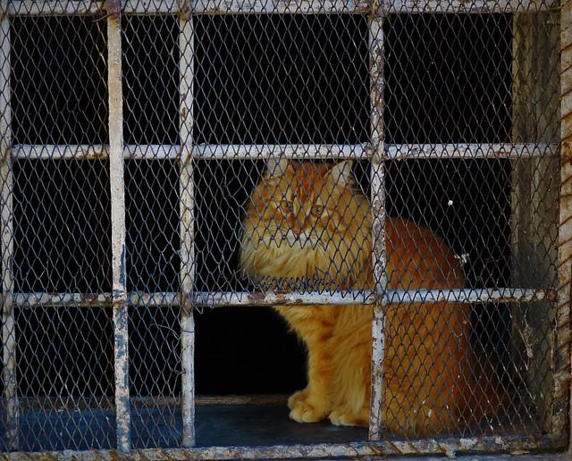 Gli occhi di un gatto sono due finestre dietro le quali una divinità misteriosa ci osserva in silenzio. (F. Caramagna)