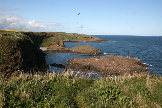 The coast between Catterline and Crawton Bay