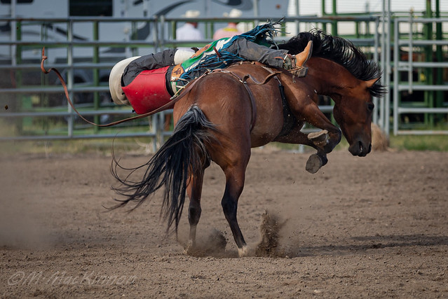 Arrowwood Rodeo 2018