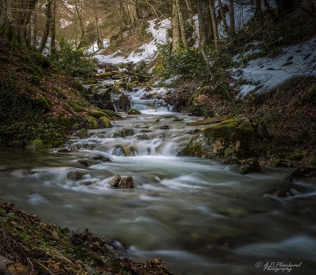 A woodland reverie