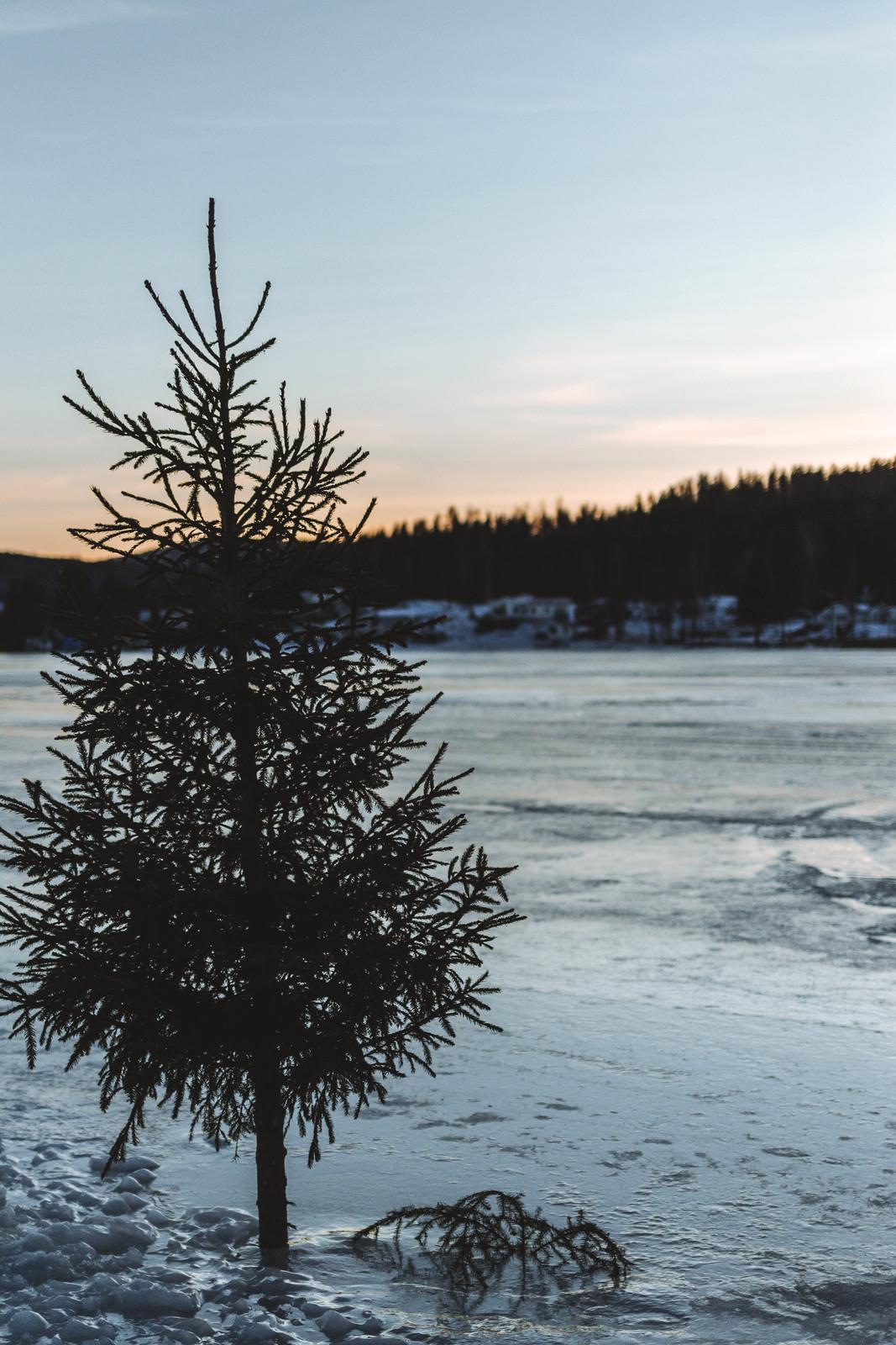 200214 - Ispromenad vid Nyänget med Siv