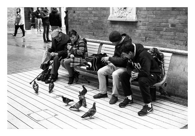 FILM - Liverpool Street pigeons