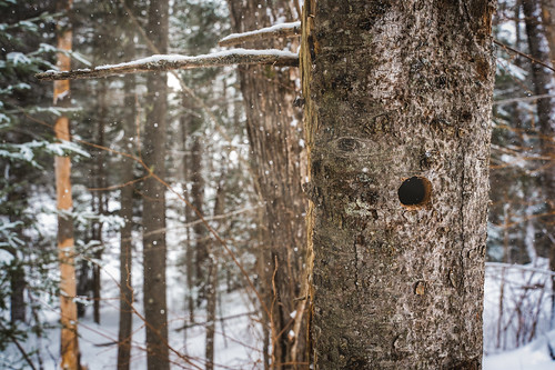 canada flickr moncton newbrunswick shawnharquail forest hole ice nature outdoor outside shawnharquailcom snow snowing tree trees view winter