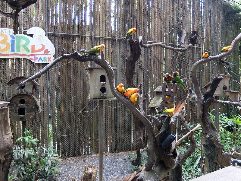 Пхукет - Парк птиц - Попугаи