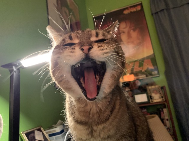 2020 62/366 3/2/2020 MONDAY - ROAR! (yawn)
