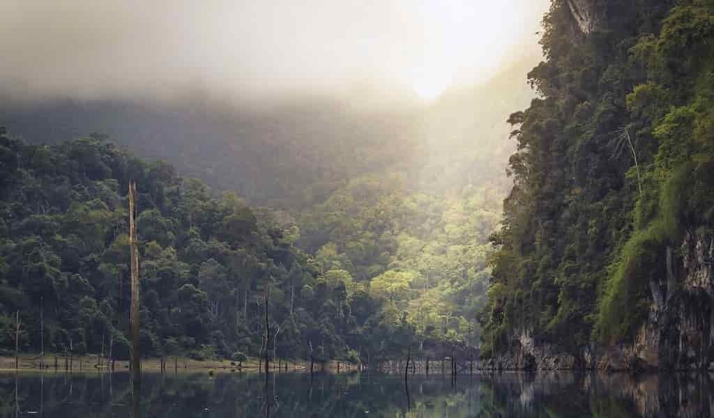 les-forêts-tropicales-absorbent-moins-de-CO2