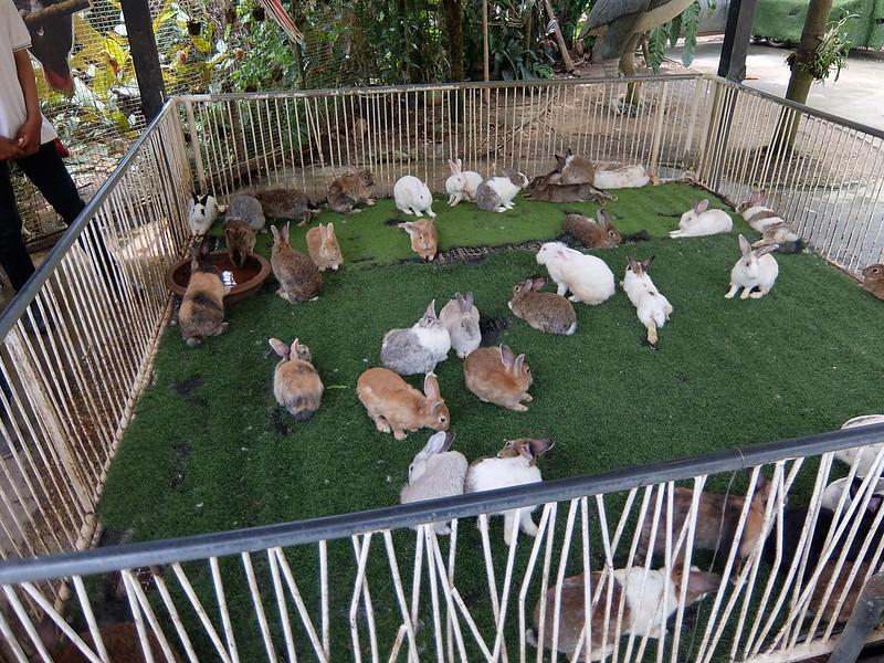 Пхукет - Парк птиц - Кролики