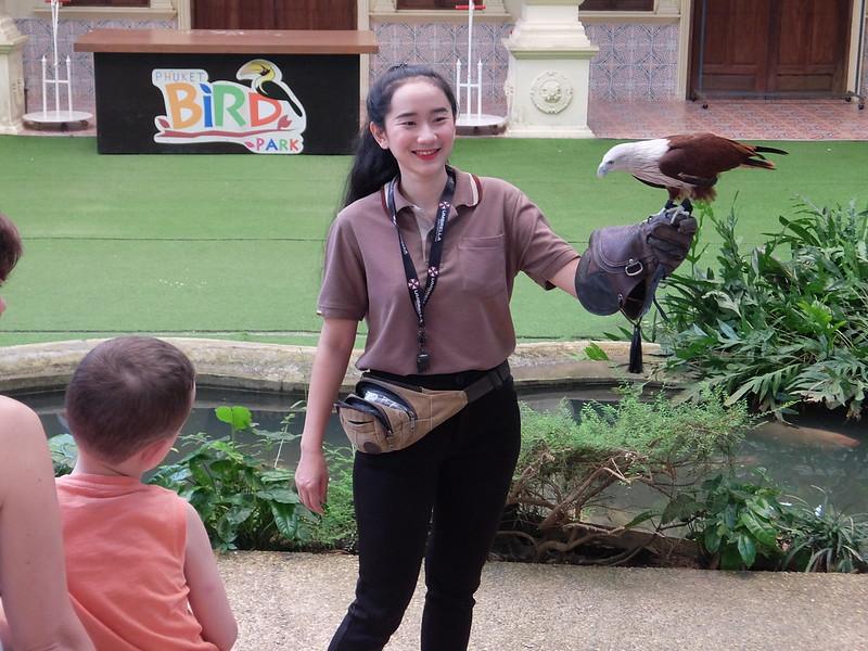 Пхукет - Парк птиц - Орел
