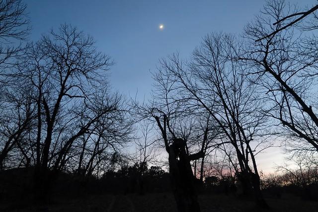 Castaños y luna