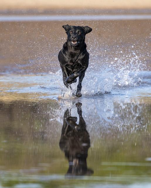 16. Splash