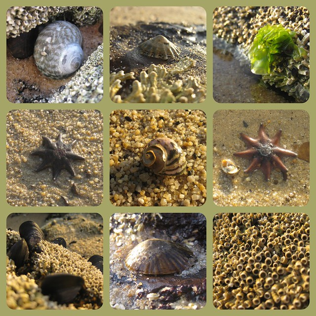 Half Moon Bay Beach Treasures