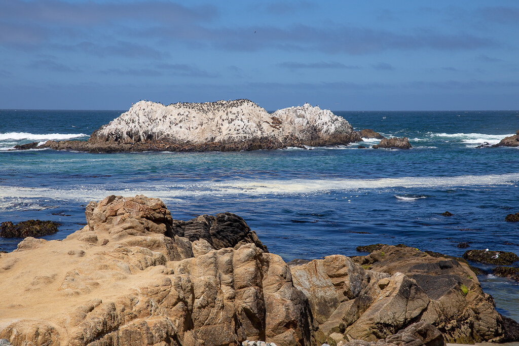 17 mile drive Bird rock1