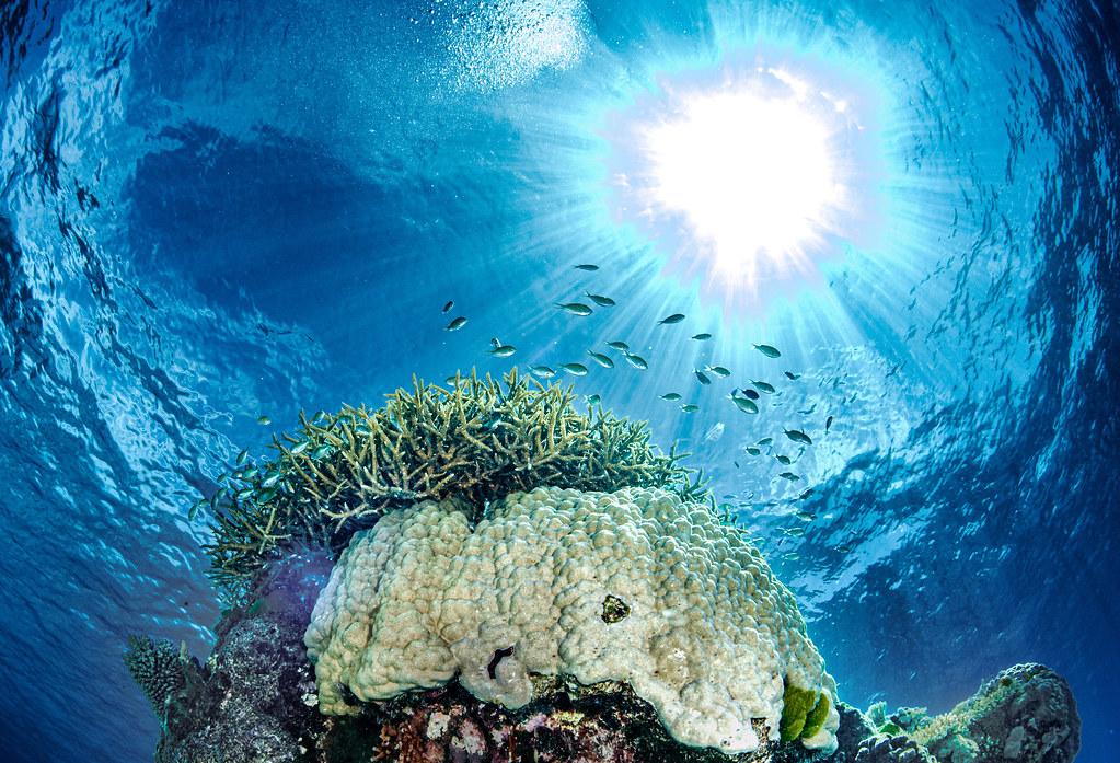Wheeler reef scene