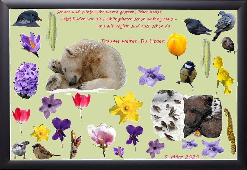 KNUT_159thMonthly_5March2020_COLLAGE_Mi_24h00_200304