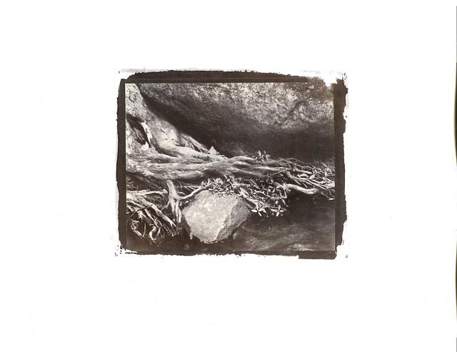 Salt Print - Fews Ford Root