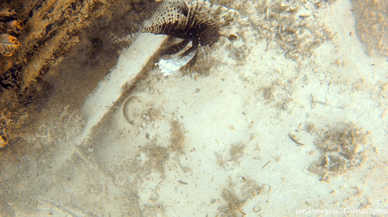 Malaysia Scubadiving_059