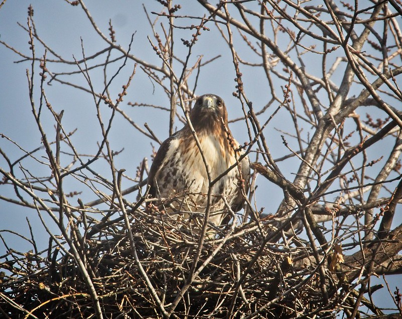 Amelia in her nest